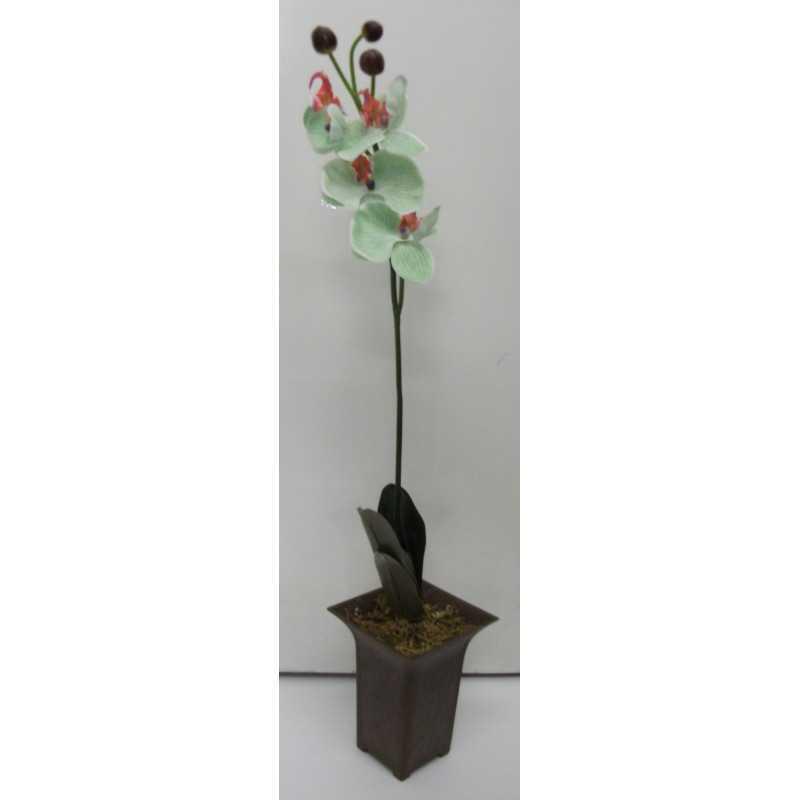Orkidea 70 cm ruukussa